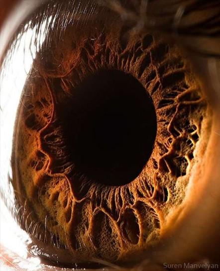 hai-mai-visto-un-occhio-da-vicino-maron