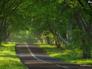 roads-57a
